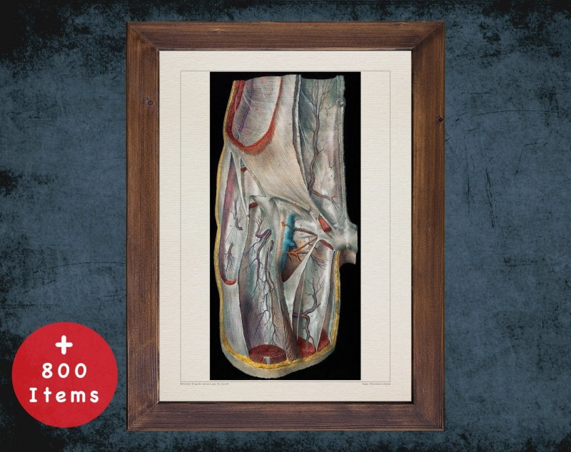 Anatomy art, THIGH HIP VEIN, medical student gift, Vessel blood and Vascular surgery, doctor office decor