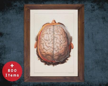 Anatomy art, LOBES BRAIN SKULL, medical student gift, neuroscience and Neurosurgery, doctor office decor