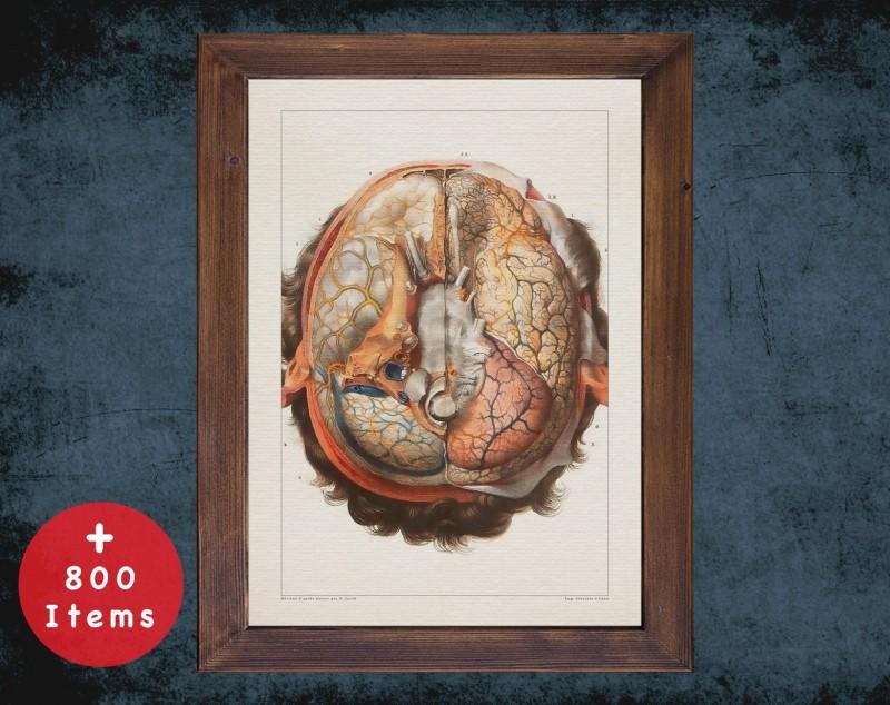 Anatomy art, BRAIN NERVOUS SYSTEM, medical student gift, neuroscience and Neurosurgery, doctor office decor