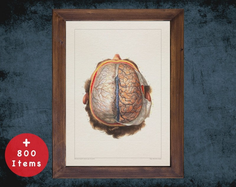 Anatomy art, BRAIN DURA MATER, medical student gift, neuroscience and Neurosurgery, doctor office decor