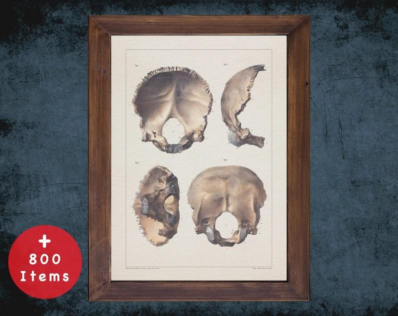 Anatomy art, SKULL OCCIPITAL BONE, medical student gift, neuroscience and Neurosurgery, doctor office decor