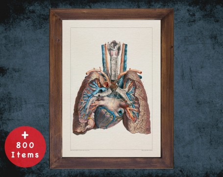 Anatomy art, LUNG PULMONARY ARTERY, medical student gift, Pulmonologists and Pulmonology, doctor office decor
