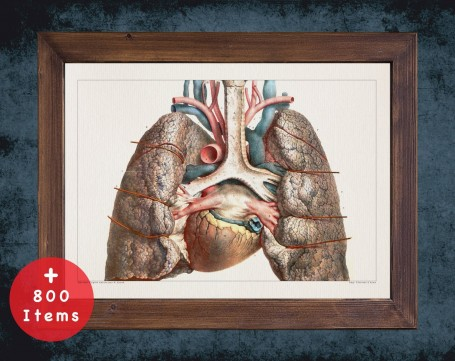 Anatomy art, LUNG ARTERY HEART, medical student gift, Pulmonologists and Pulmonology, doctor office decor