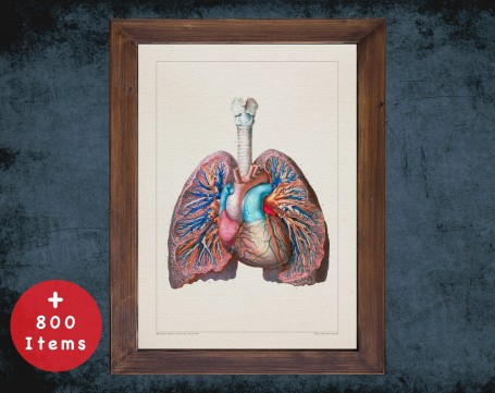 Anatomy art, TRACHEA LUNG HEART, medical student gift, Pulmonologists and Pulmonology, doctor office decor