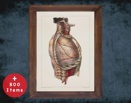 Anatomy art, TRACHEA LUNG SPINE, medical student gift, Pulmonologists and Pulmonology, doctor office decor