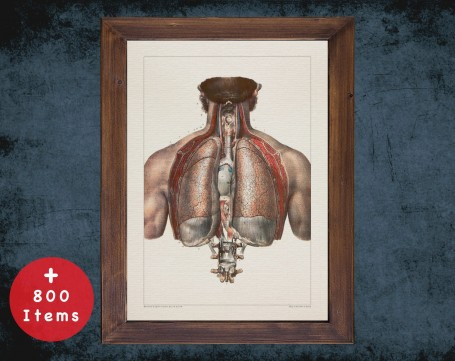 Anatomy art, TRACHEA LUNG CHEST, medical student gift, Pulmonologists and Pulmonology, doctor office decor
