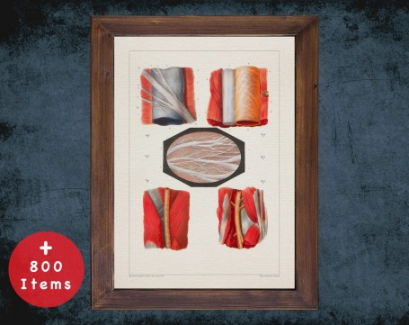Anatomy art, FEMORAL ARTERY TISSUE, medical student gift, osteopaths and osteopathy, doctor office decor