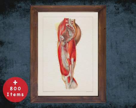 Anatomy art, SPINAL NERVOUS SYSTEM, medical student gift, osteopaths and osteopathy, doctor office decor