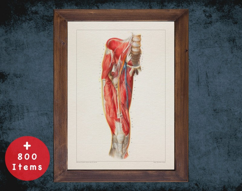 Anatomy art, SPINE NERVES LEG, medical student gift, osteopaths and osteopathy, doctor office decor