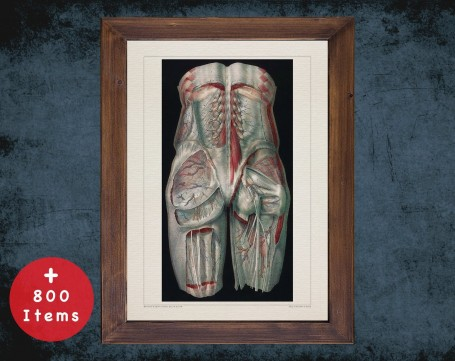 Anatomy art, BUTTOCKS BACK VEIN, medical student gift, Vessel blood and Vascular surgery, doctor office decor