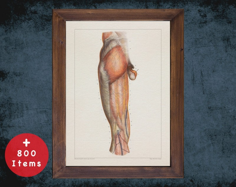 Anatomy art, NERVES SKIN LEG, medical student gift, osteopaths and osteopathy, doctor office decor