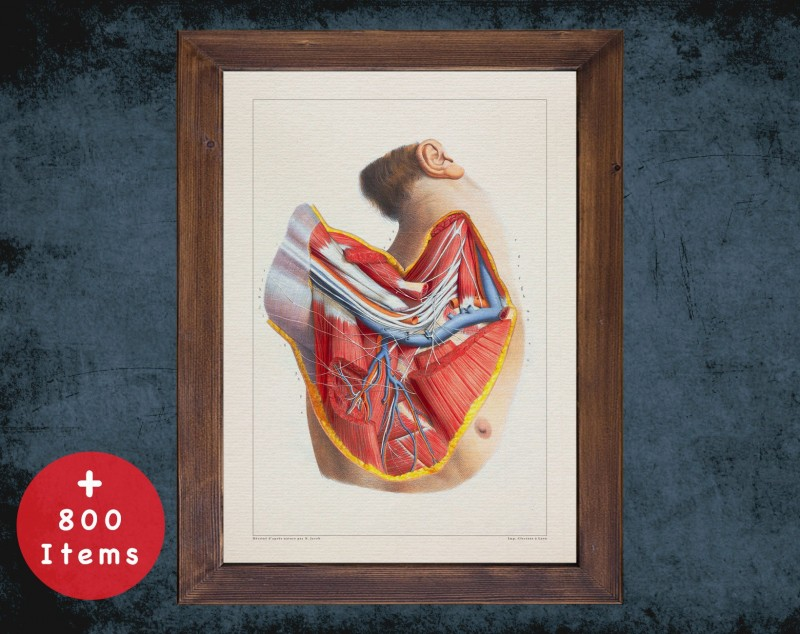 Anatomy art, AXILLA BLOOD SYSTEM, medical student gift, osteopaths and osteopathy, doctor office decor