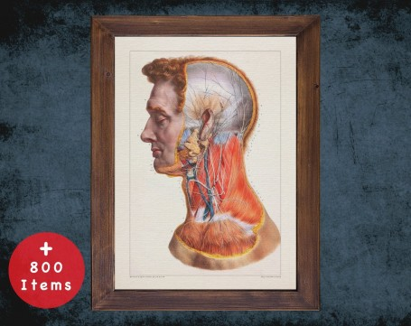Anatomy art, HEAD NECK ARTERY, medical student gift, osteopaths and osteopathy, doctor office decor