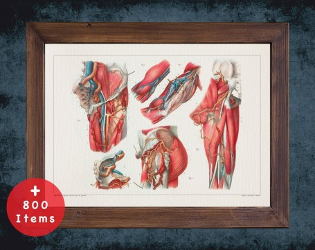 Anatomy art, HUMAN BODY ARTERY, medical student gift, osteopaths and osteopathy, doctor office decor