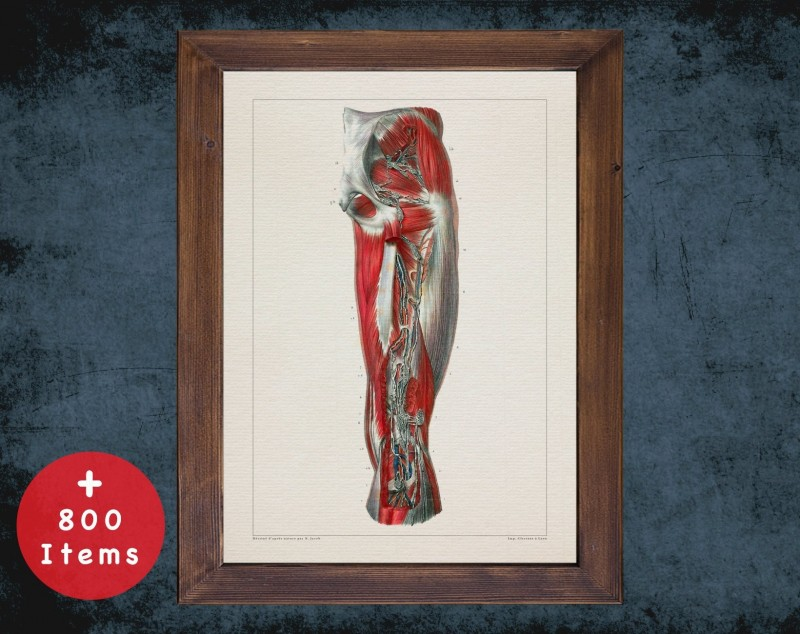 Anatomy art, LYMPH NODE LEG, medical student gift, osteopaths and osteopathy, doctor office decor
