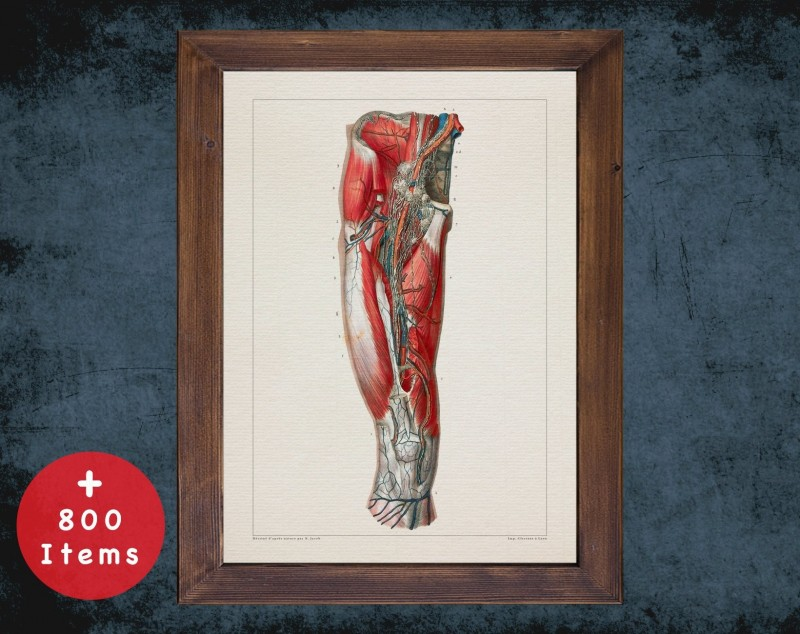 Anatomy art, FEMORAL ARTERY THIGH, medical student gift, osteopaths and osteopathy, doctor office decor
