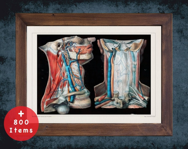 Anatomy art, HEAD NECK ARTERY, medical student gift, Vessel blood and Vascular surgery, doctor office decor