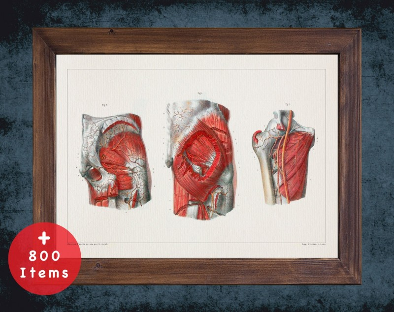 Anatomy art, HIP ARTERY MUSCLE, medical student gift, osteopaths and osteopathy, doctor office decor