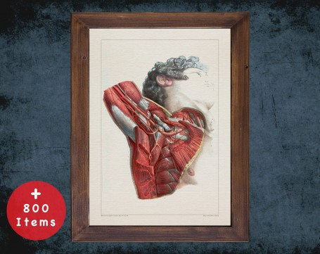 Anatomy art, AXILLA ARTERY MUSCLE, medical student gift, osteopaths and osteopathy, doctor office decor