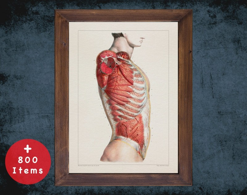 Anatomy art, TORSO LATERAL ARTERY, medical student gift, osteopaths and osteopathy, doctor office decor