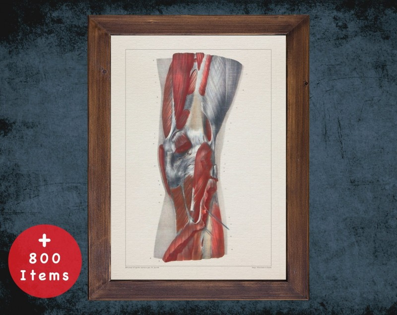Anatomy art, KNEE PATELLA MUSCLE, medical student gift, osteopaths and osteopathy, doctor office decor