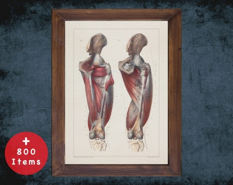 Anatomy art, HIP FEMUR KNEE, medical student gift, osteopaths and osteopathy, doctor office decor