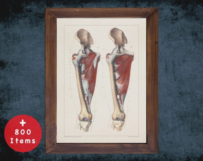 Anatomy art, HIP FEMUR JOINT, medical student gift, osteopaths and osteopathy, doctor office decor