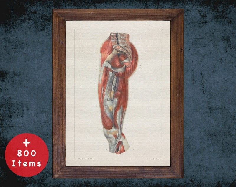 Anatomy art, THIGH KNEE BACKBONES, medical student gift, osteopaths and osteopathy, doctor office decor