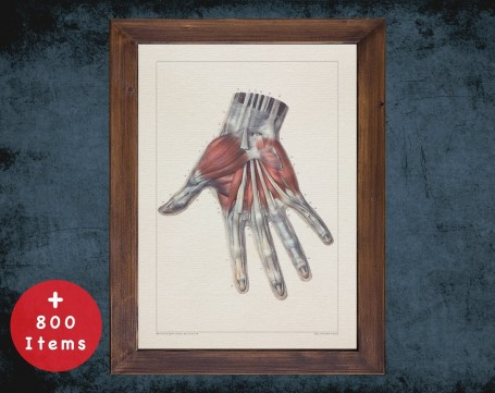 Anatomy art, HAND TENDON LIGAMENT, medical student gift, osteopaths and osteopathy, doctor office decor