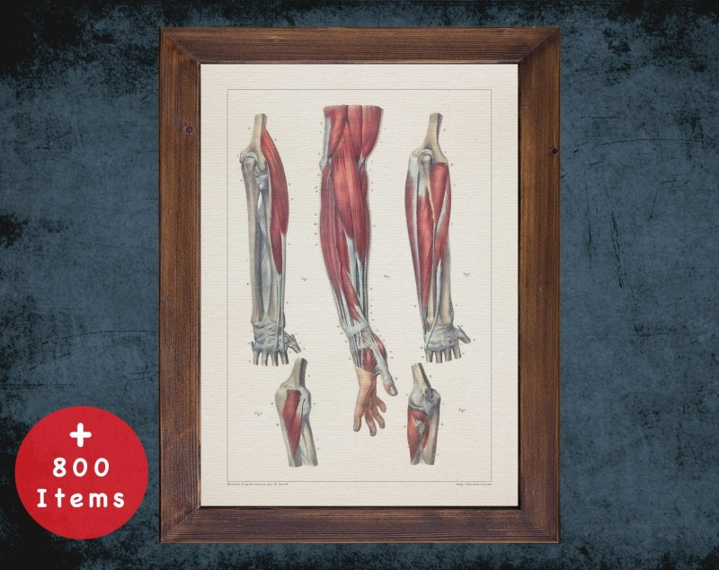 Anatomy art, FOREARM ELBOW TENDONS, medical student gift, osteopaths and osteopathy, doctor office decor