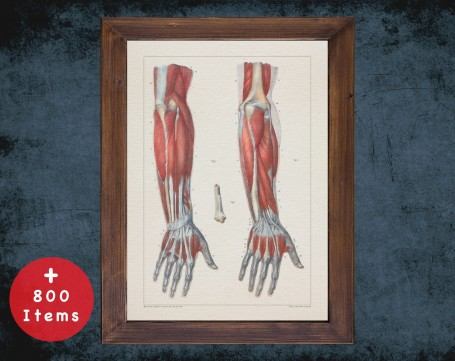 Anatomy art, FOREARM HAND TENDONS, medical student gift, osteopaths and osteopathy, doctor office decor