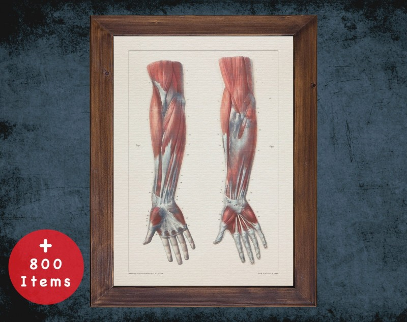 Anatomy art, FOREARM HAND MUSCLE, medical student gift, osteopaths and osteopathy, doctor office decor