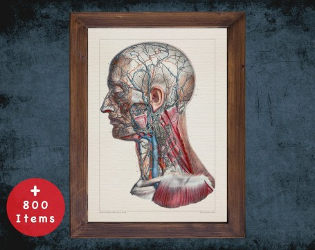 Anatomy art, CAROTID NECK ARTERY, medical student gift, Vessel blood and Vascular surgery, doctor office decor