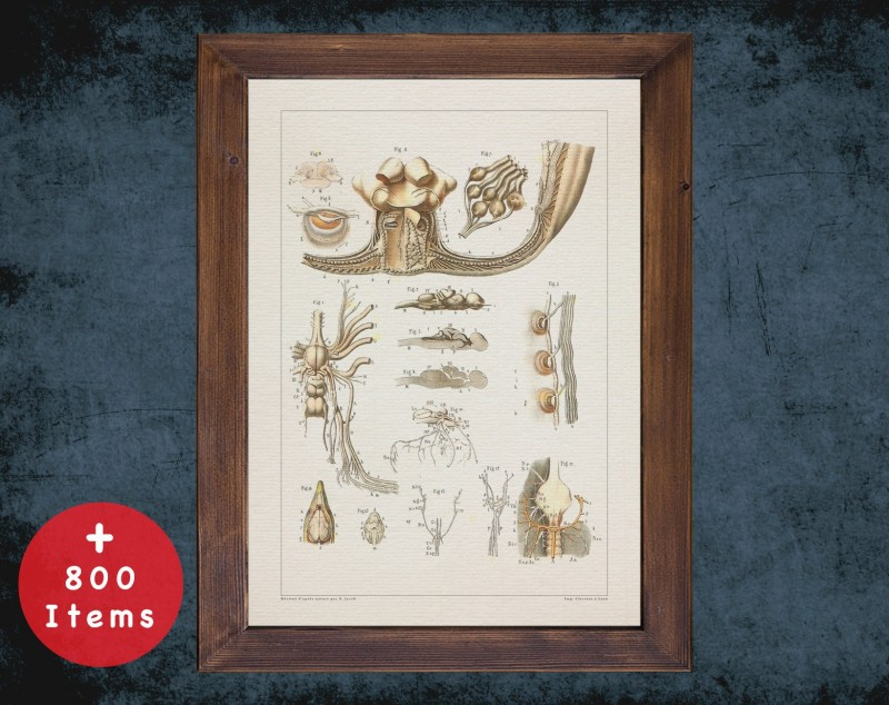 Anatomy art, FISH NERVOUS SYSTEM, medical student gift, Veterinary and vet, doctor office decor