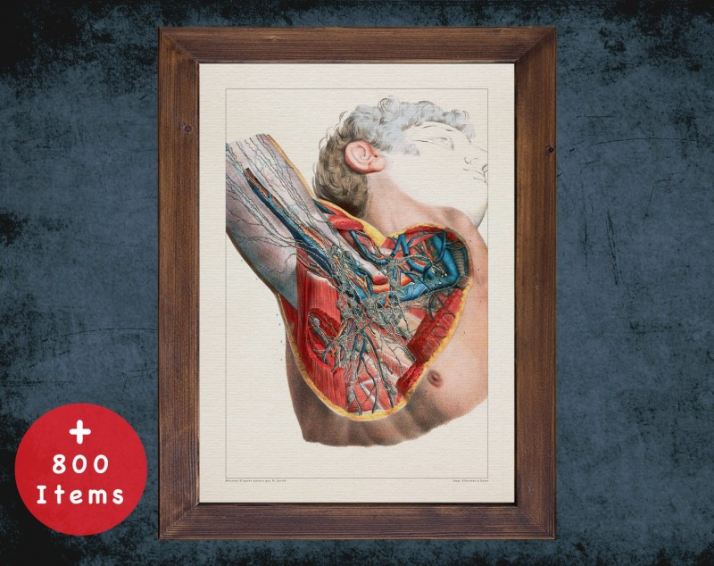 Anatomy art, AXILLA VEIN ARTERY, medical student gift, Vessel blood and Vascular surgery, doctor office decor