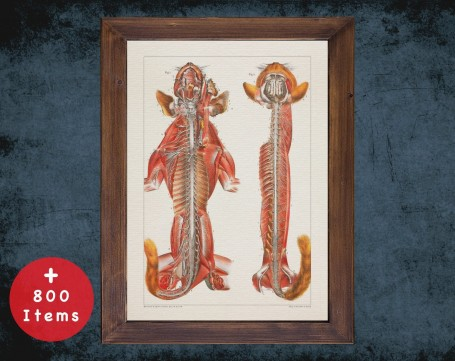 Anatomy art, CAT NERVOUS SYSTEM, medical student gift, Veterinary and vet, doctor office decor