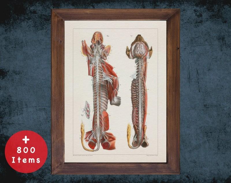 Anatomy art, DOG NERVOUS SYSTEM, medical student gift, Veterinary and vet, doctor office decor