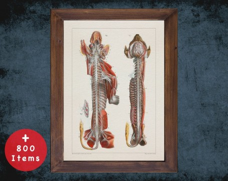 Anatomy art, DOG NERVOUS SYSTEM, medical student gift, Veterinary and vet, doctor office decor