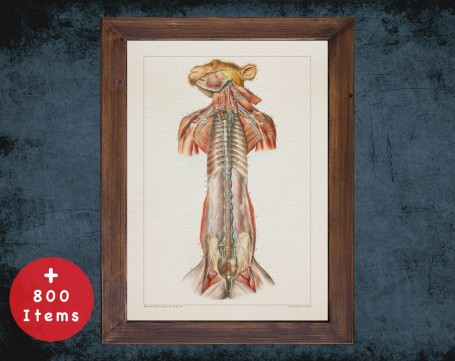 Anatomy art, MONKEY NERVOUS SYSTEM, medical student gift, Veterinary and vet, doctor office decor