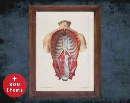 Anatomy art, BACK NERVOUS SYSTEM, medical student gift, therapist and Physical therapy, doctor office decor