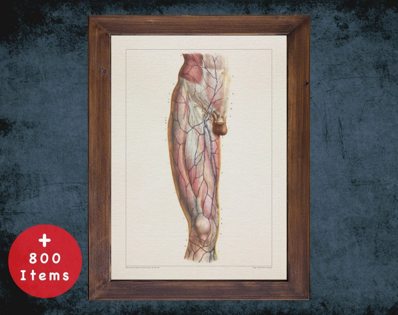 Anatomy art, VEIN UNDER SKIN, medical student gift, therapist and Physical therapy, doctor office decor